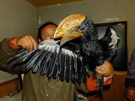 タンザニアより大型鳥類、猛禽類などが到着しました3